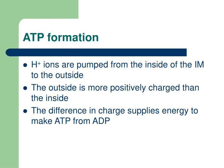 ATP formation