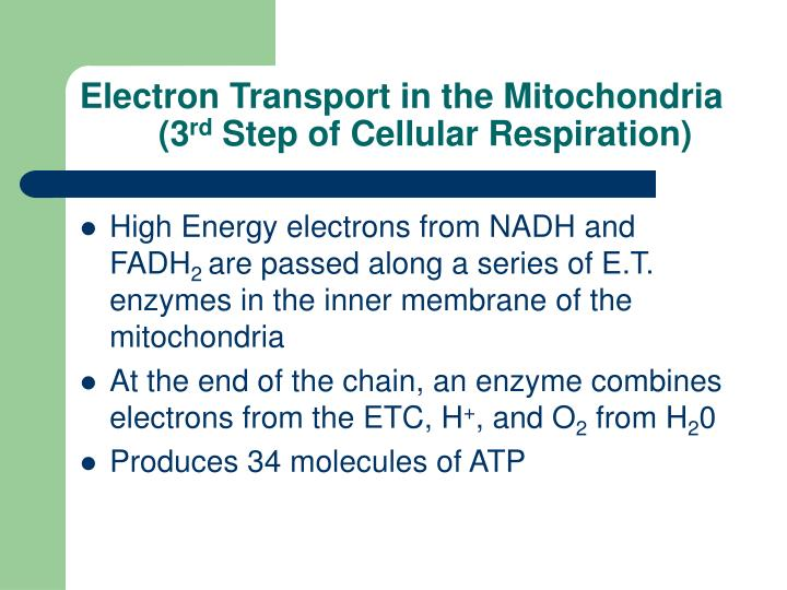 Electron Transport in the Mitochondria