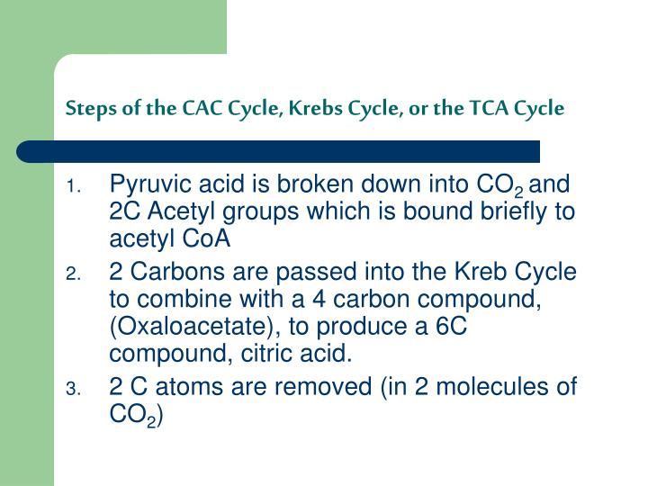 Steps of the CAC Cycle, Krebs Cycle, or the TCA Cycle