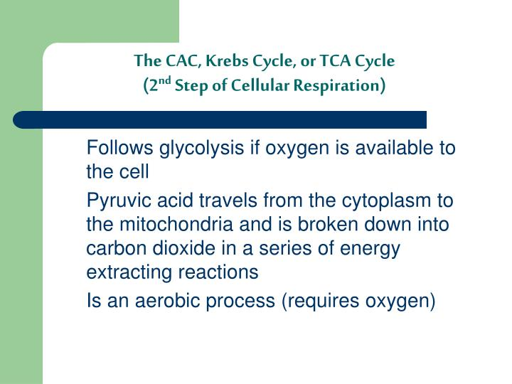 The CAC, Krebs Cycle, or TCA Cycle