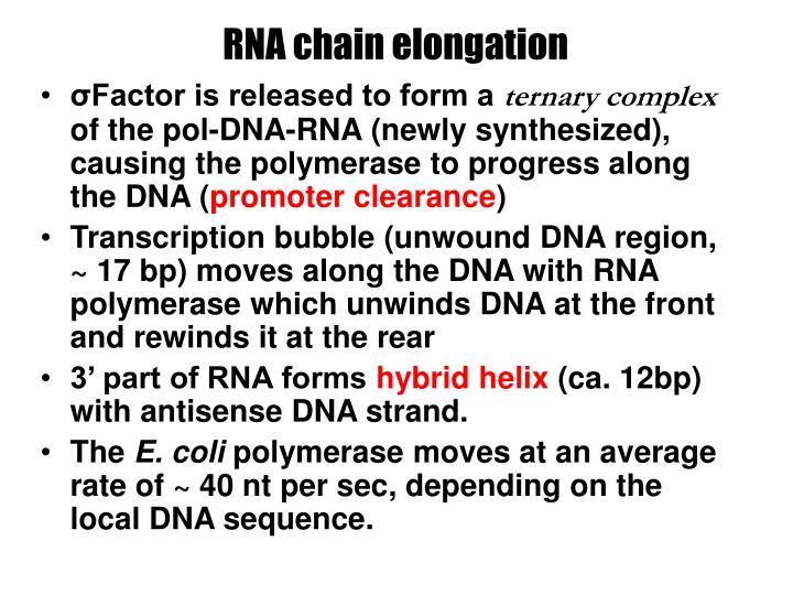 RNA chain elongation
