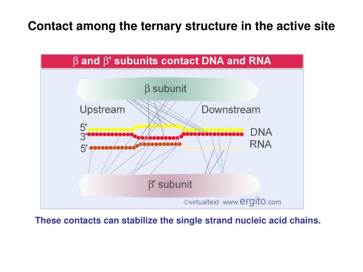 Contact among the ternary structure in the active site