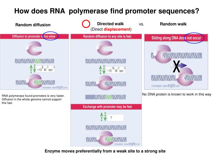 How does RNA  polymerase find promoter sequences?