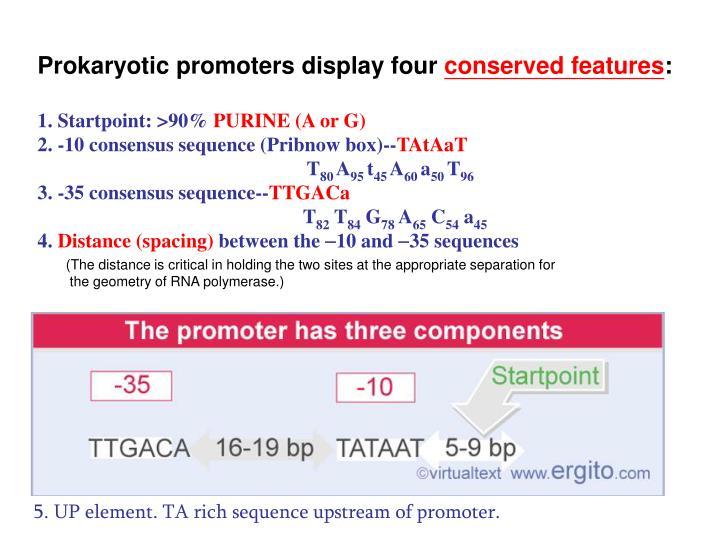Prokaryotic promoters display four