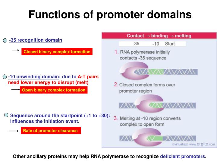 Functions of promoter domains