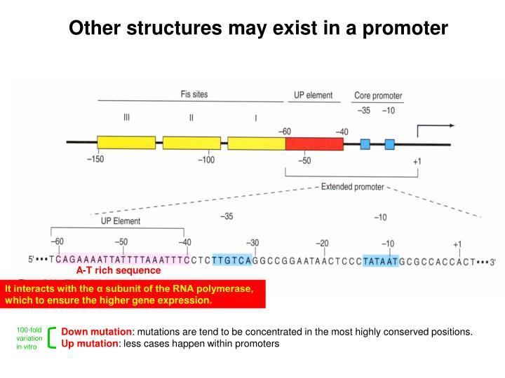 Other structures may exist in a promoter