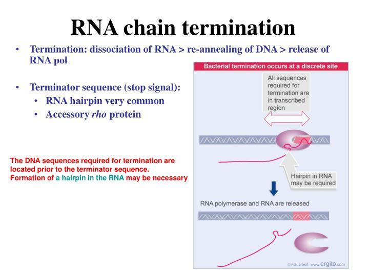 RNA chain termination