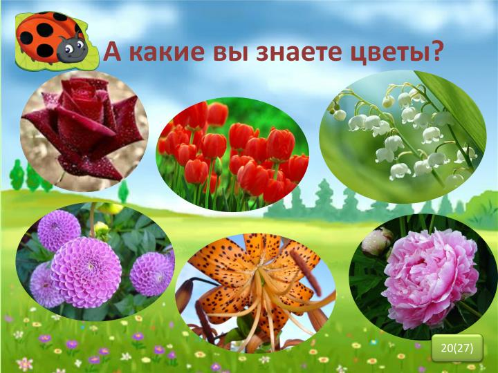 А какие вы знаете цветы?