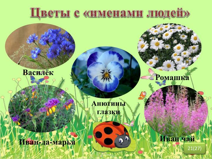 Цветы с «именами людей»