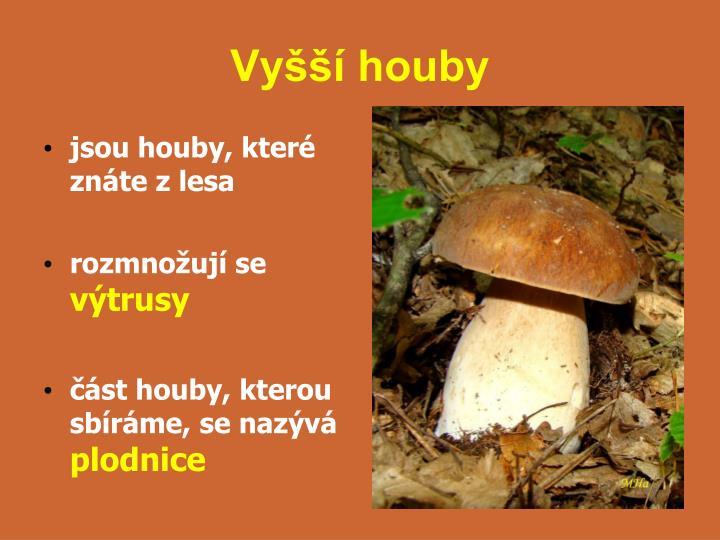Vyšší houby