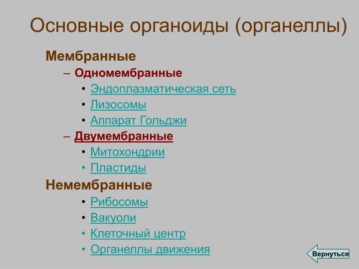 Основные органоиды (органеллы)