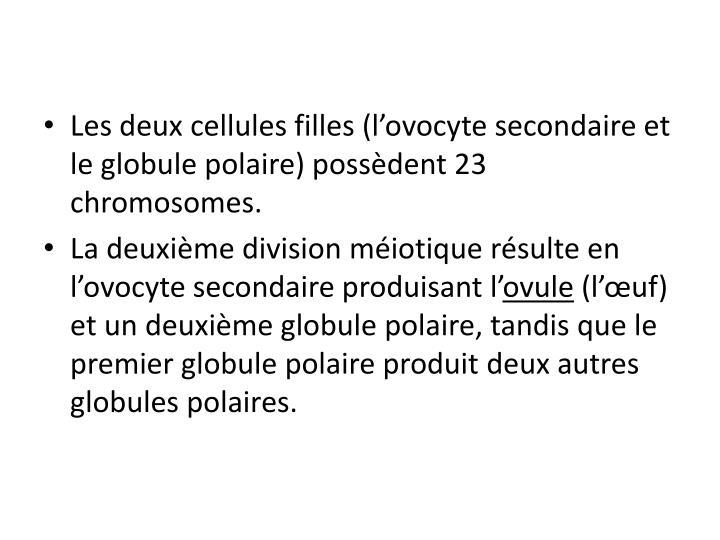 Les deux cellules filles (l'ovocyte secondaire et le globule polaire) possèdent 23 chromosomes.