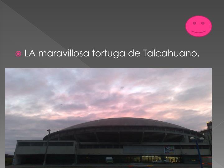 LA maravillosa tortuga de Talcahuano.