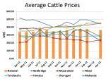 average cattle prices