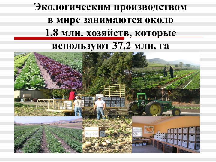 Экологическим производством в мире занимаются около       1,8 млн. хозяйств, которые используют 37,2 млн. га