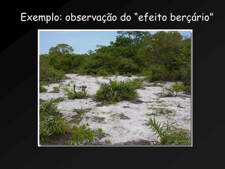 Exemplo: observao do efeito berrio