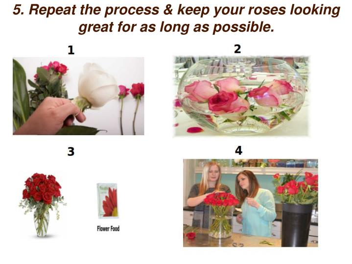 5. Repeat the process & keep your roses looking great for as long as possible.