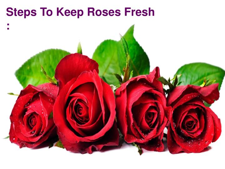 Steps To Keep Roses Fresh :