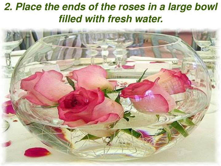 2. Place the ends of the roses in a large bowl filled with fresh water.