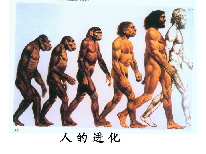 人 的 进 化