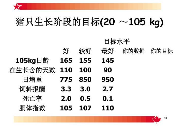 猪只生长阶段的目标(20 ~105