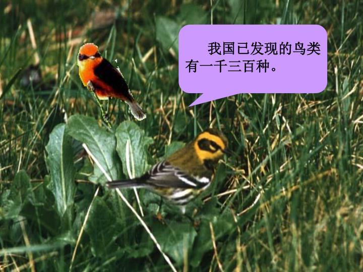我国已发现的鸟类有一千三百种。