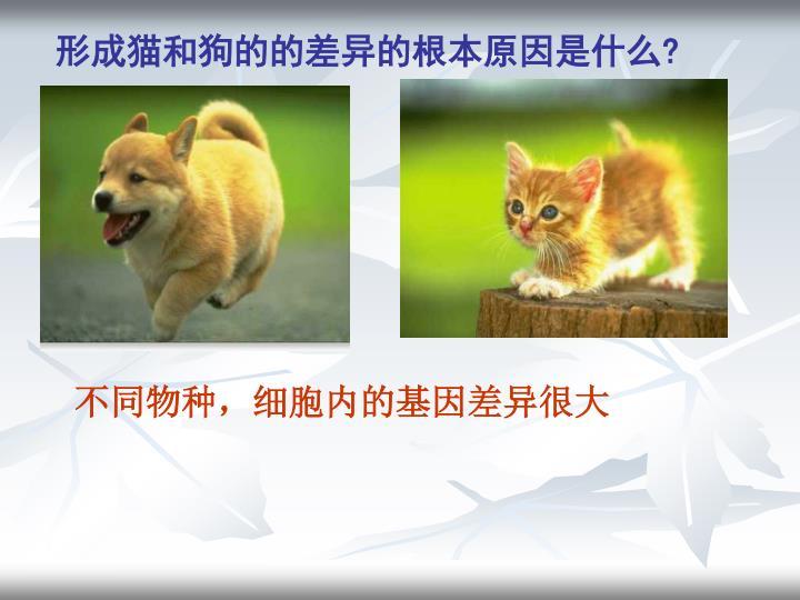 形成猫和狗的的差异的根本原因是什么