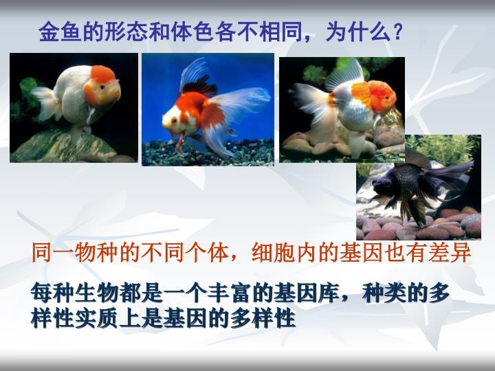 金鱼的形态和体色各不相同,为什么?