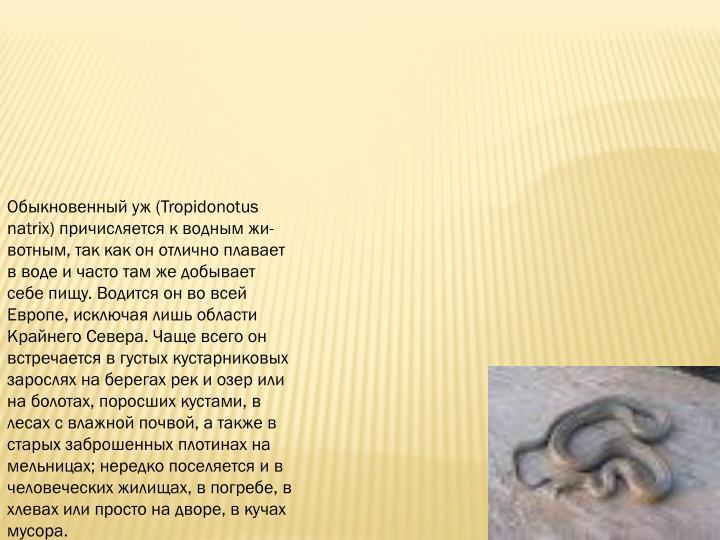 (Tropidonotus natrix)    ,              .     ,     .                ,  ,     ,        ;      ,  ,      ,   .