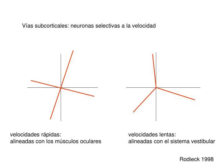 Vías subcorticales: neuronas selectivas a la velocidad