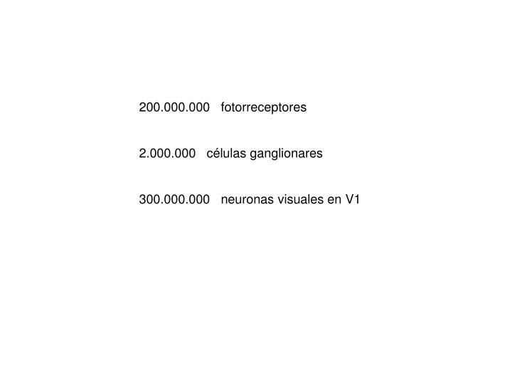 200.000.000   fotorreceptores