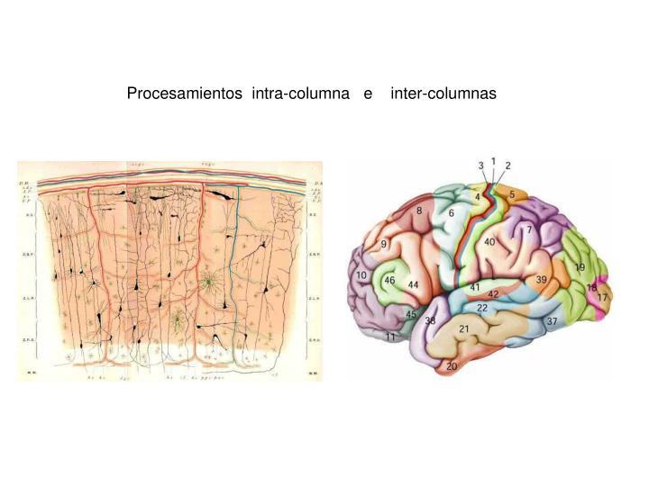 Procesamientos  intra-columna   e    inter-columnas