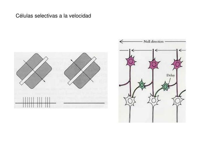 Células selectivas a la velocidad