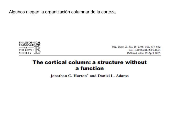 Algunos niegan la organización columnar de la corteza
