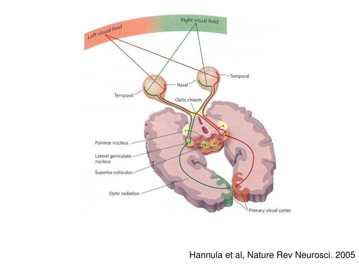 Hannula et al, Nature Rev Neurosci. 2005