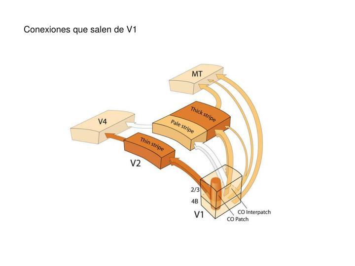Conexiones que salen de V1