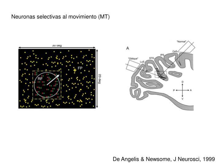 Neuronas selectivas al movimiento (MT)