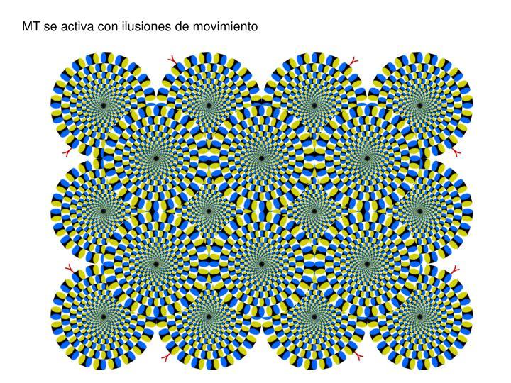 MT se activa con ilusiones de movimiento