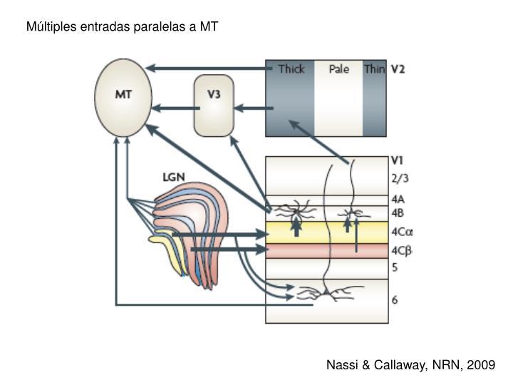 Múltiples entradas paralelas a MT