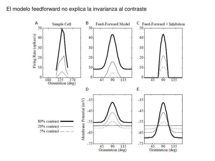 El modelo feedforward no explica la invarianza al contraste