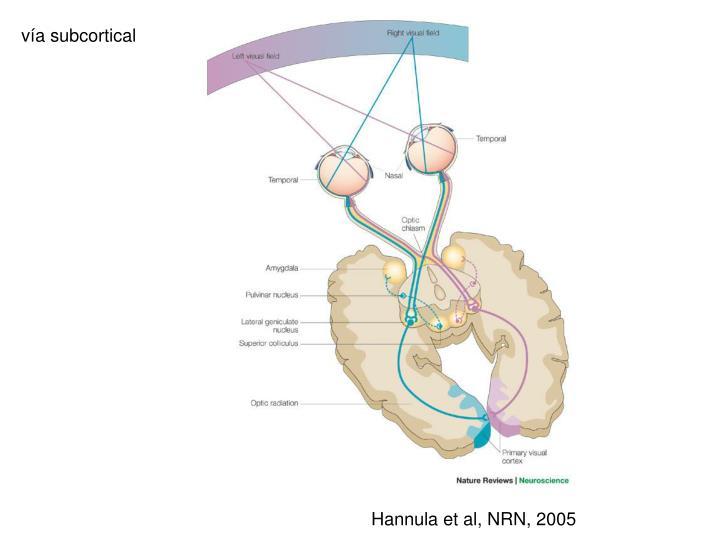 vía subcortical