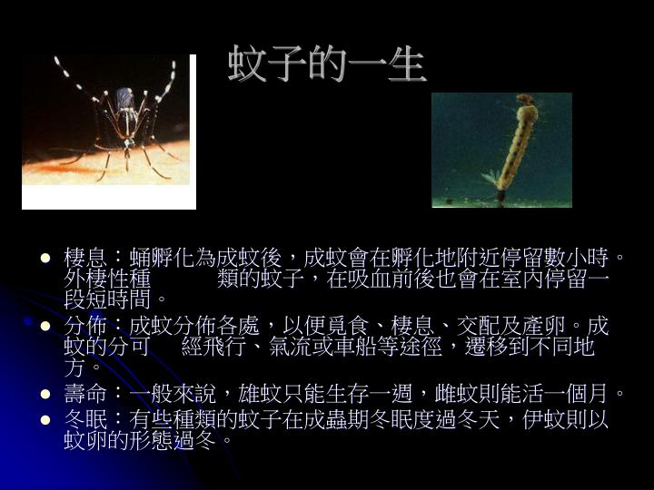 蚊子的一生