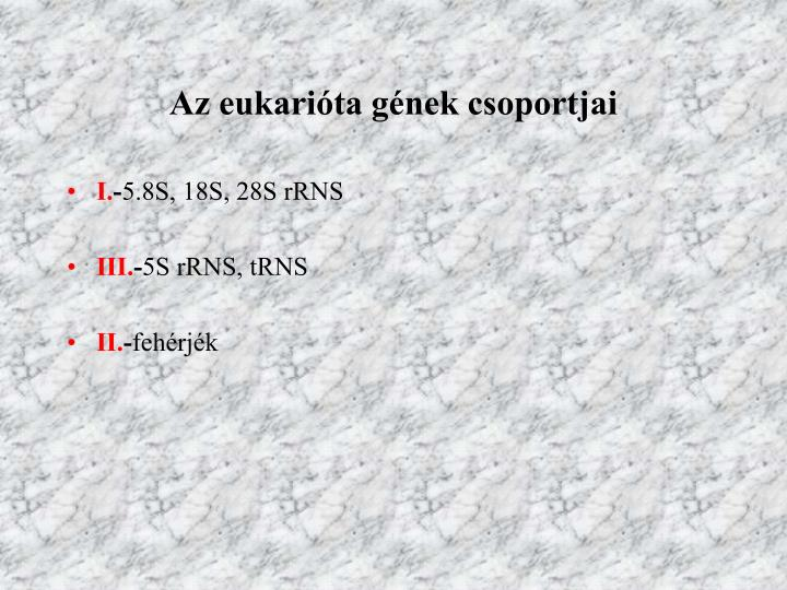 Az eukarióta gének csoportjai
