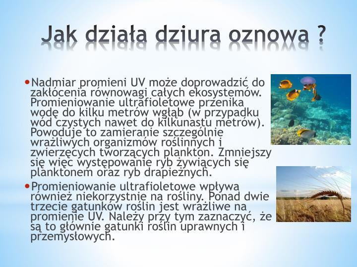 Nadmiar promieni UV może doprowadzić do zakłócenia równowagi całych ekosystemów. Promieniowanie ultrafioletowe przenika     wodę do kilku metrów
