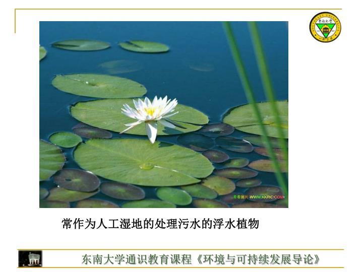常作为人工湿地的处理污水的浮水植物