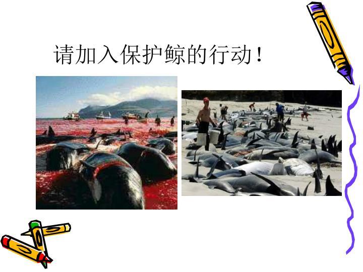 请加入保护鲸的行动!