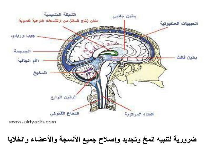 ضرورية لتنبيه المخ وتجديد وإصلاح جميع الأنسجة والأعضاء والخلايا