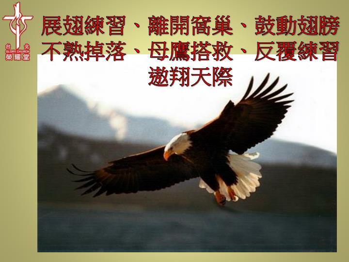 展翅練習、離開窩巢、鼓動翅膀不熟掉落、母鷹搭救、反覆練習