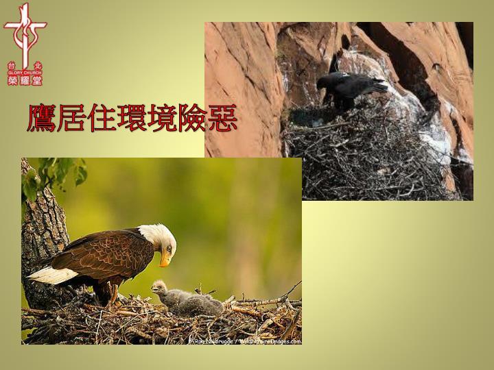 鷹居住環境險惡