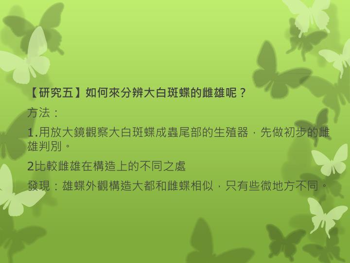 【研究五】如何來分辨大白斑蝶的雌雄呢?